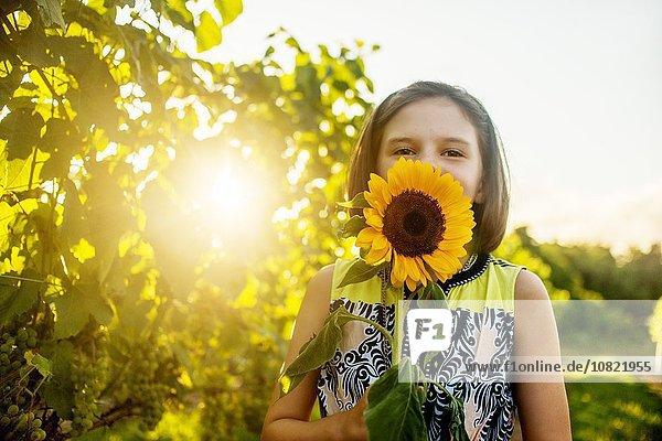 Porträt eines Mädchens mit Sonnenblume vor dem Gesicht im sonnigen Weinberg