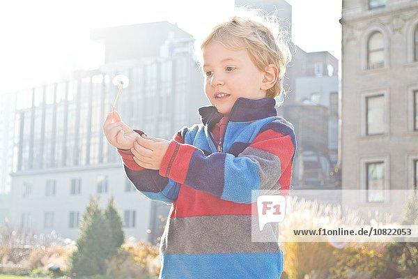 Außenaufnahme Junge - Person halten jung Löwenzahn freie Natur
