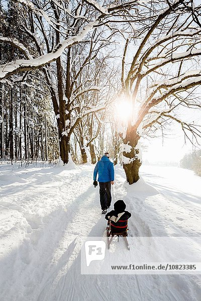 Rear view of man pulling toddler daughter on sledge in snow covered woods  Berg  Bavaria  Germany