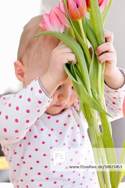 Female toddler lifting up bunch of tulips