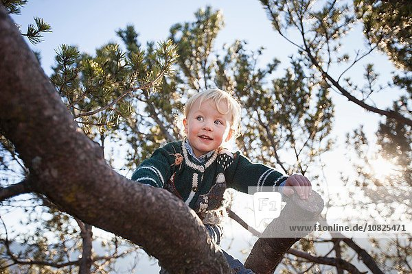 Happy female toddler climbing tree in forest