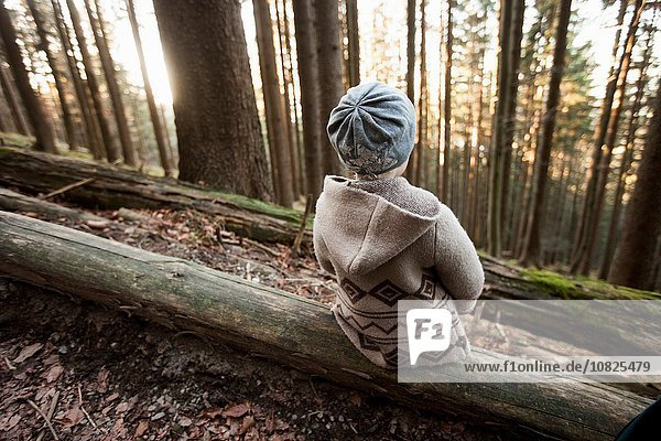 Female toddler sitting on tree trunk in forest  Tegernsee  Bavaria  Germany