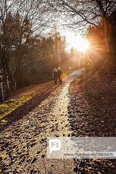 Seniorenpaar beim Spaziergang auf der sonnigen Waldstraße im Herbst  Lombardei  Italien