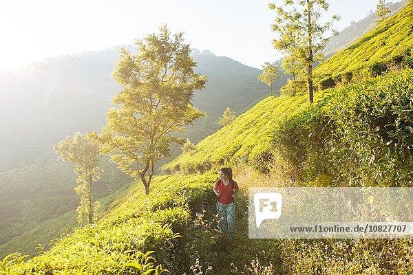 Junge Frau auf Teeplantagen bei Munnar  Kerala  Indien