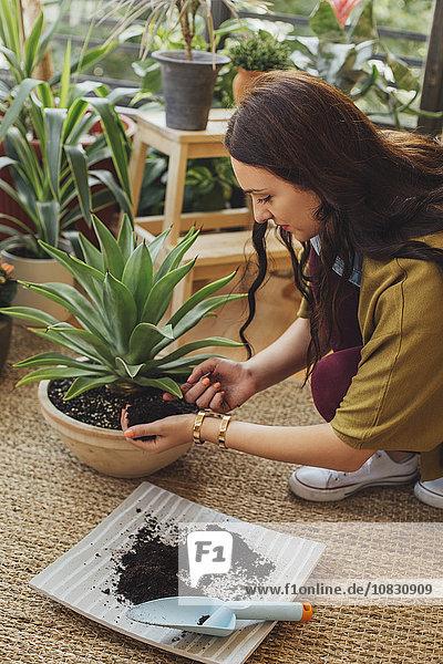Europäer Frau Pflanze Topfpflanze anpflanzen