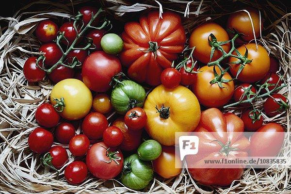 Tomatenstilleben mit verschiedenen Tomatesorten