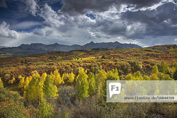 Wolken über gelben Herbstbäumen im Tal unter den Bergen  Dallas Divide  Colorado  USA
