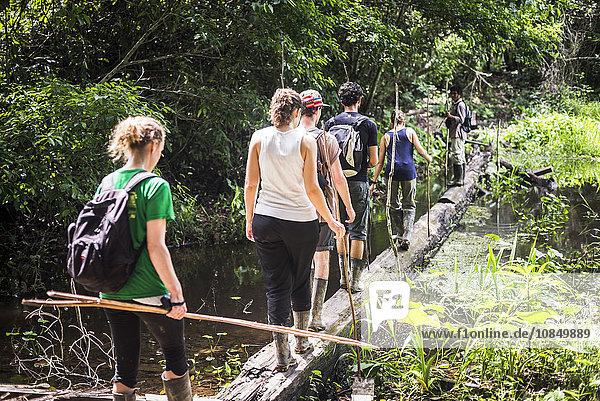 Amazon Jungle walk in Puerto Maldonado area at Tambopata National Reserve  Tambopata Province  Peru  South America