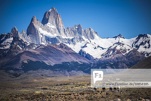 Gauchos riding horses and herding sheep with Mount Fitz Roy behind  UNESCO World Heritage Site  El Chalten  Patagonia  Argentina  South America