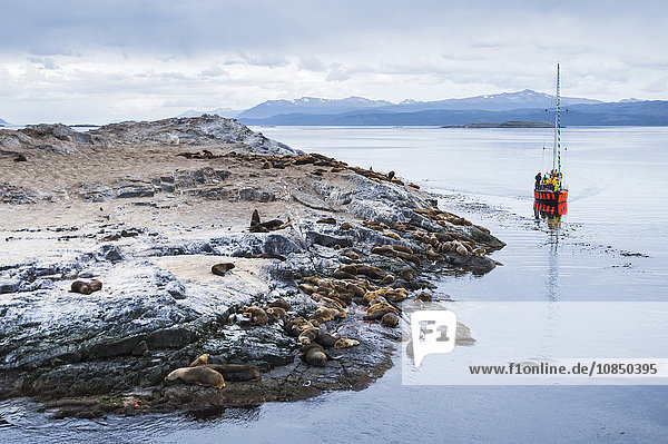 Beagle Channel sailing boat observing Sea Lion colony  Ushuaia  Tierra Del Fuego  Patagonia  Argentina  South America