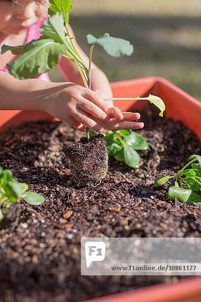 Young girl in garden  planting plant in tub