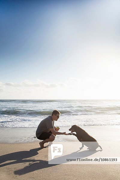 Mid adult man and dog on beach  man shaking hands with dog