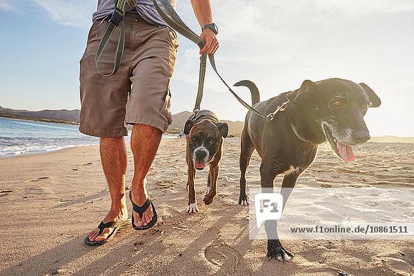Besitzer geht mit Hunden am Strand spazieren