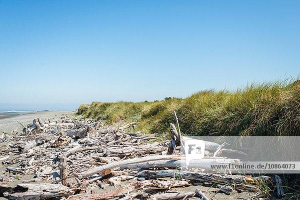 Driftwood washed ashore on beach  Oregon Coast  USA