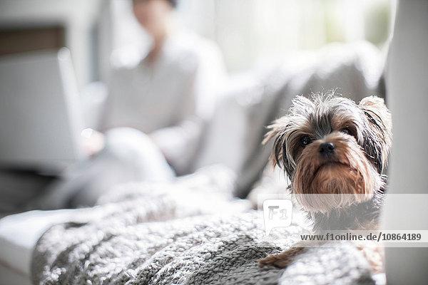 Haushund auf Sofa  Besitzer im Hintergrund