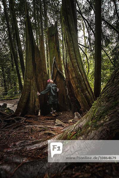 Frauen im Wald an roten Zedernarmen öffnen sich mit Blick nach oben  Lynn Canyon Park  Nordvancouver  British Columbia  Kanada