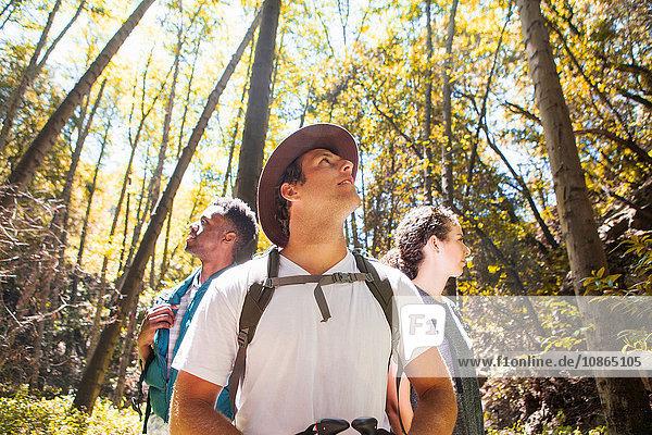 Drei junge erwachsene Wanderer schauen im Wald auf  Arcadia  Kalifornien  USA