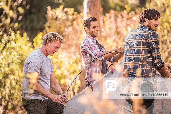 Drei Männer bauen ein Kuppelzelt im Wald auf  Deer Park  Kapstadt  Südafrika