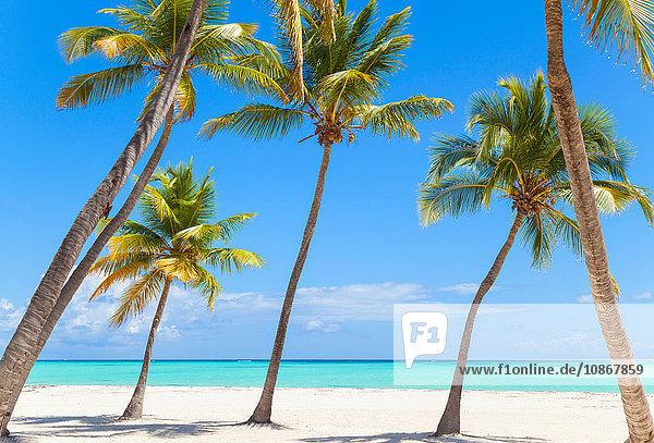 Schiefe Palmen am Strand  Dominikanische Republik  Karibik