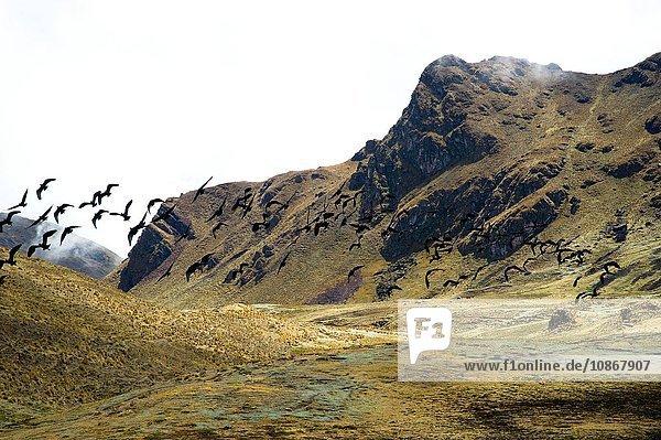 High pass (4350m) in the Urubamba mountain range  Peru