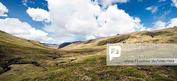 Abstieg durch die Pampa nach Punta Carretera im Urubamba-Gebirge  Peru