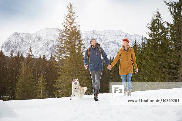 Husky-Paar zu Fuß in schneebedeckter Landschaft  Elmau  Bayern  Deutschland