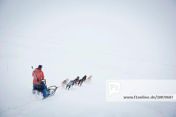 Ein Führer mit Gewehr (zum Schutz vor Eisbären) macht sich auf einen Schlitten mit Huskys in Spitzbergen auf den Weg. Spitzbergen ist die größte Insel des arktischen Archipels Svalbard  Norwegen.