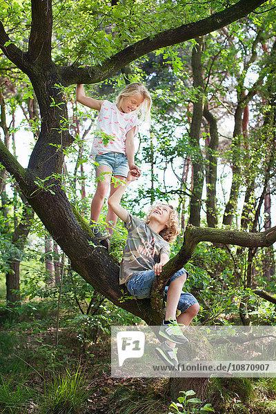 Junge und Mädchen in Baum von Angesicht zu Angesicht lächelnd Junge und Mädchen in Baum von Angesicht zu Angesicht lächelnd