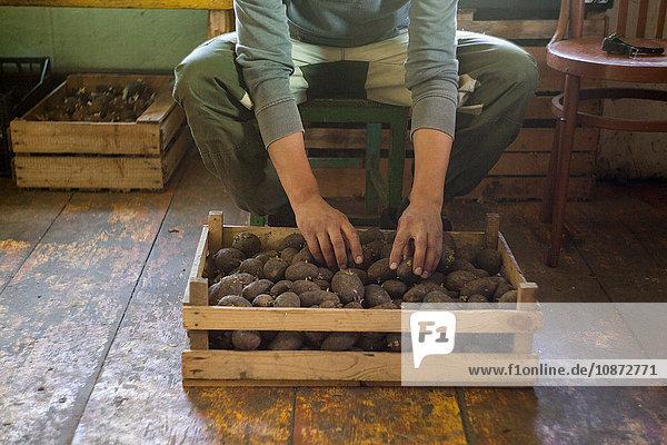 Mann sortiert Kiste mit Pflanzkartoffeln im Schuppen