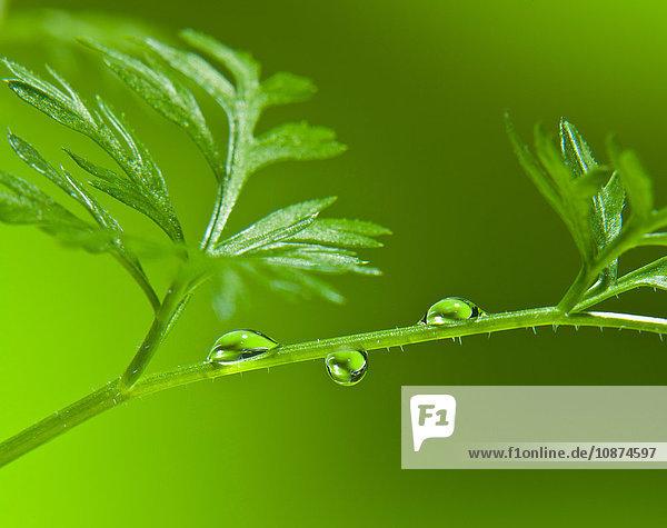 Nahaufnahme von Wassertröpfchen am grün beblätterten Stängel