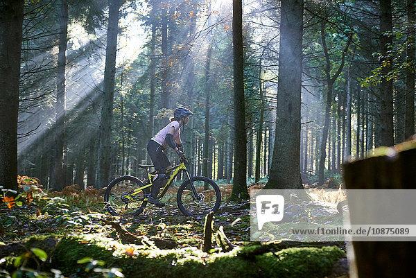 Mountainbikerin radelt durch den von Sonnenstrahlen beleuchteten Forest of Dean  Bristol  UK