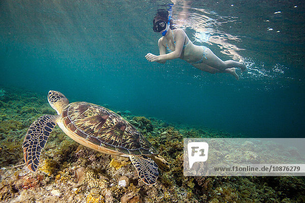Young woman swimming with rare green sea turtle (Chelonia Mydas)  Moalboal  Cebu  Philippines
