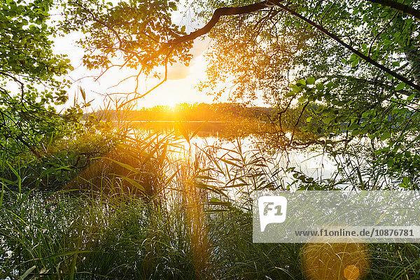 Sonnenuntergang über dem See  Osterseen  Bayern  Deutschland