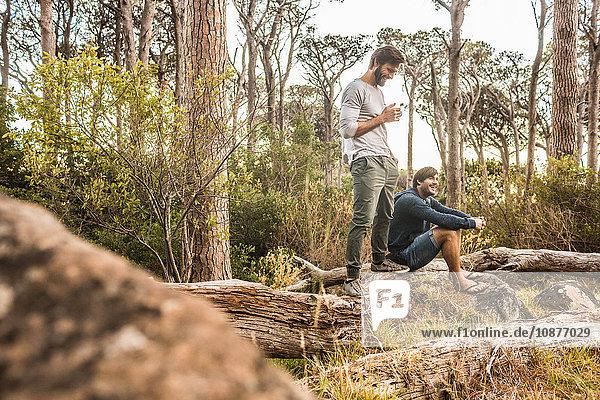 Zwei Männer trinken Kaffee auf einem umgefallenen Baum im Wald  Deer Park  Kapstadt  Südafrika