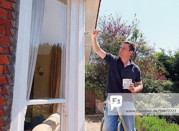 Mann auf Leiter malt Fensterrahmen