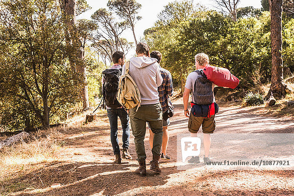Rear view of four men hiking in forest  Deer Park  Cape Town  South Africa