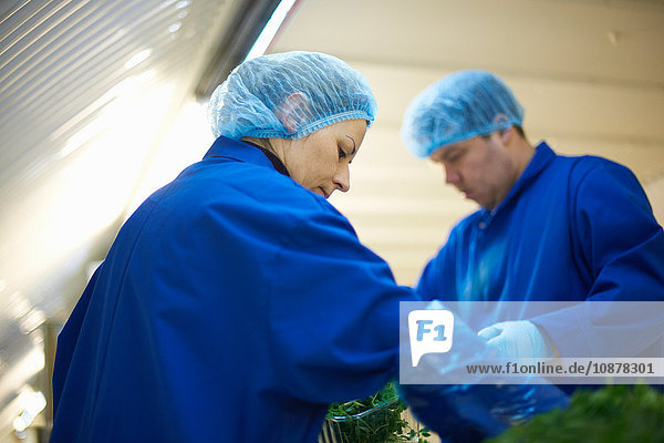 Workers on production line wearing hair nets packaging vegetables