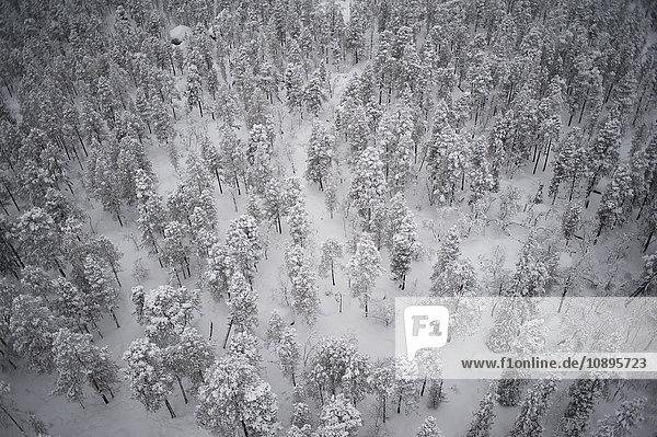 Schweden  Lappland  Jokkmokk  Luftaufnahme Wald im Winter