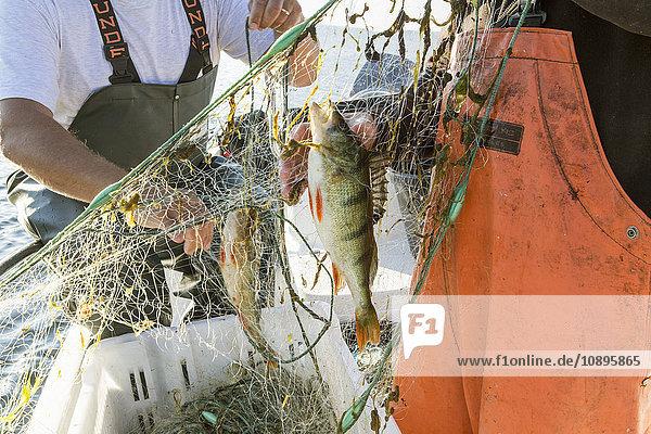 Schweden  Medelpad  Fischernetz mit Fischen