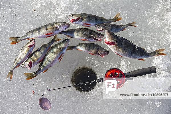 Schweden  Blick auf tote Fische neben dem Angelplatz