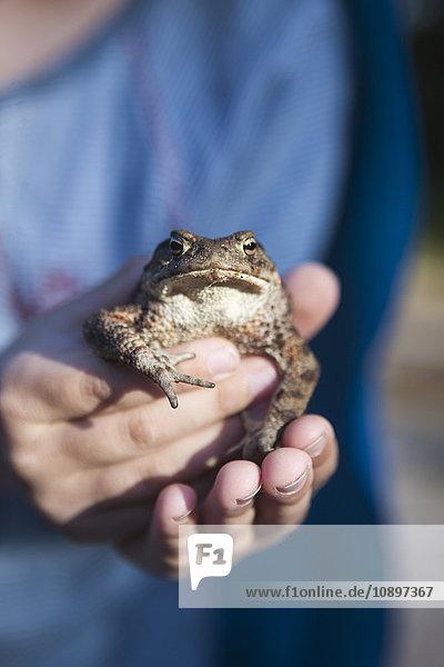 Schweden  Smaland  Hasselo  Mädchen (4-5) hält Frosch in Händen