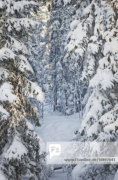 Schweden  Sodermanland  Tyresta  Wald unter Schnee