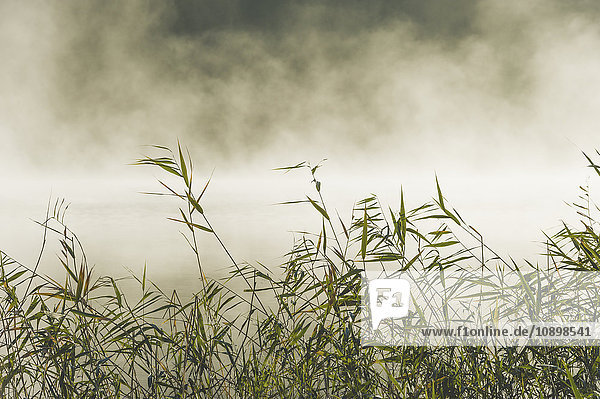 Schweden  Sodermanland  Yngaren  Gras mit Nebel im Hintergrund