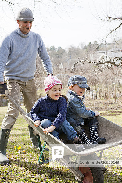 Sweden  Sodermanland  Huddinge  Stuvsta  Father with sons (4-5) in wheelbarrow