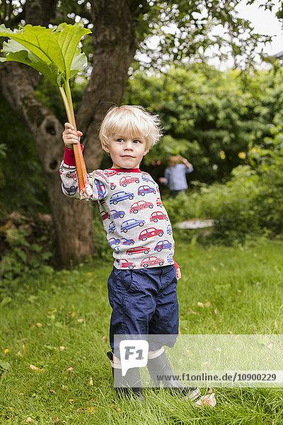 Sweden  Sodermanland  Alvsjo  Little blonde boy (2-3) standing on grass holding rhubarb leaves