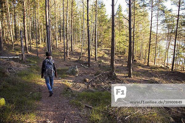 Schweden  Vastergotland  Lerum  Rückansicht des Wanderers im Wald