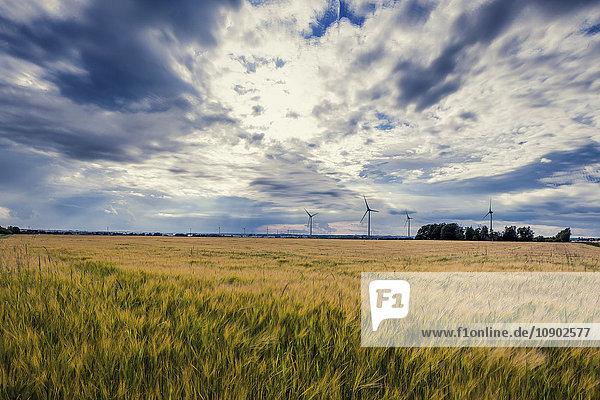 Schweden  Skane  Gardstanga  Feld- und Windenergieanlagen