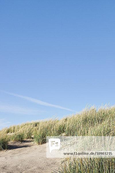 Finnland  Pori  Yyteri  Gras am Sandstrand