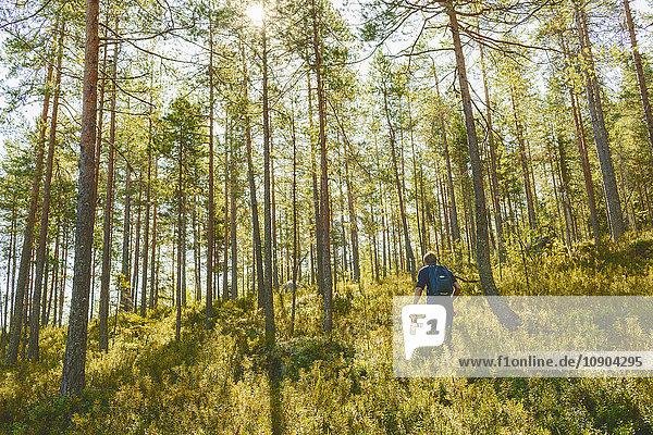 Finnland  Keski-Suomi  Jyvaskyla  Wanderer im Kiefernwald