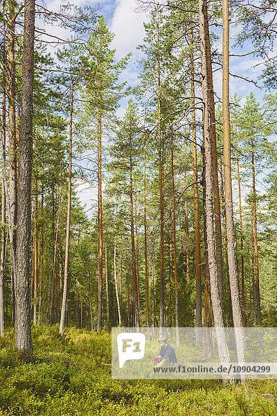 Finnland  Keski-Suomi  Jyvaskyla  Mann beim Beerenpflücken im Kiefernwald